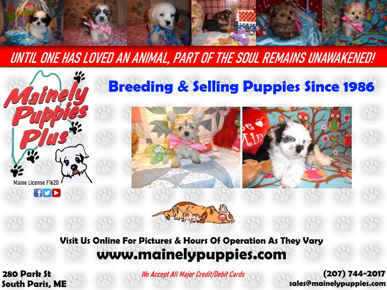 mainely puppies, oxford county, me